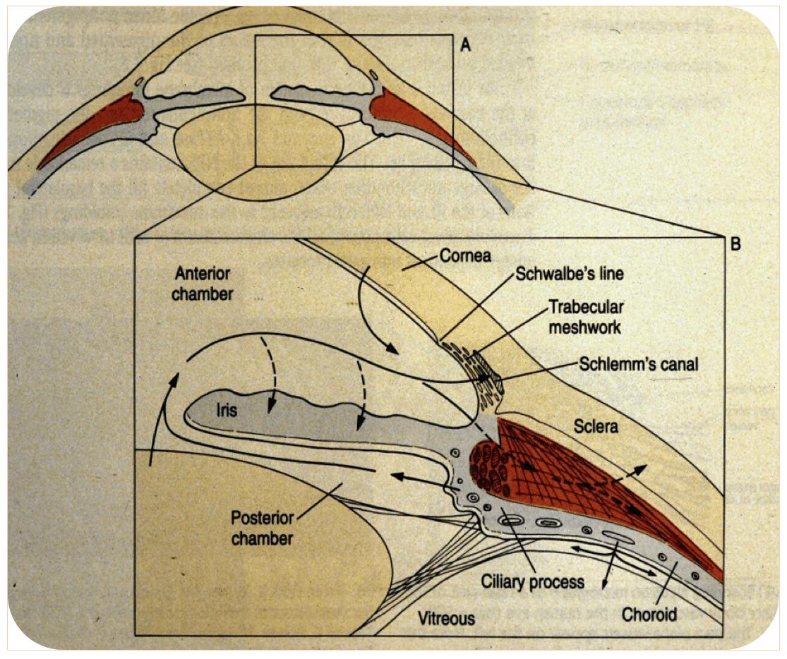 glaucome, flux humeur acqueuse