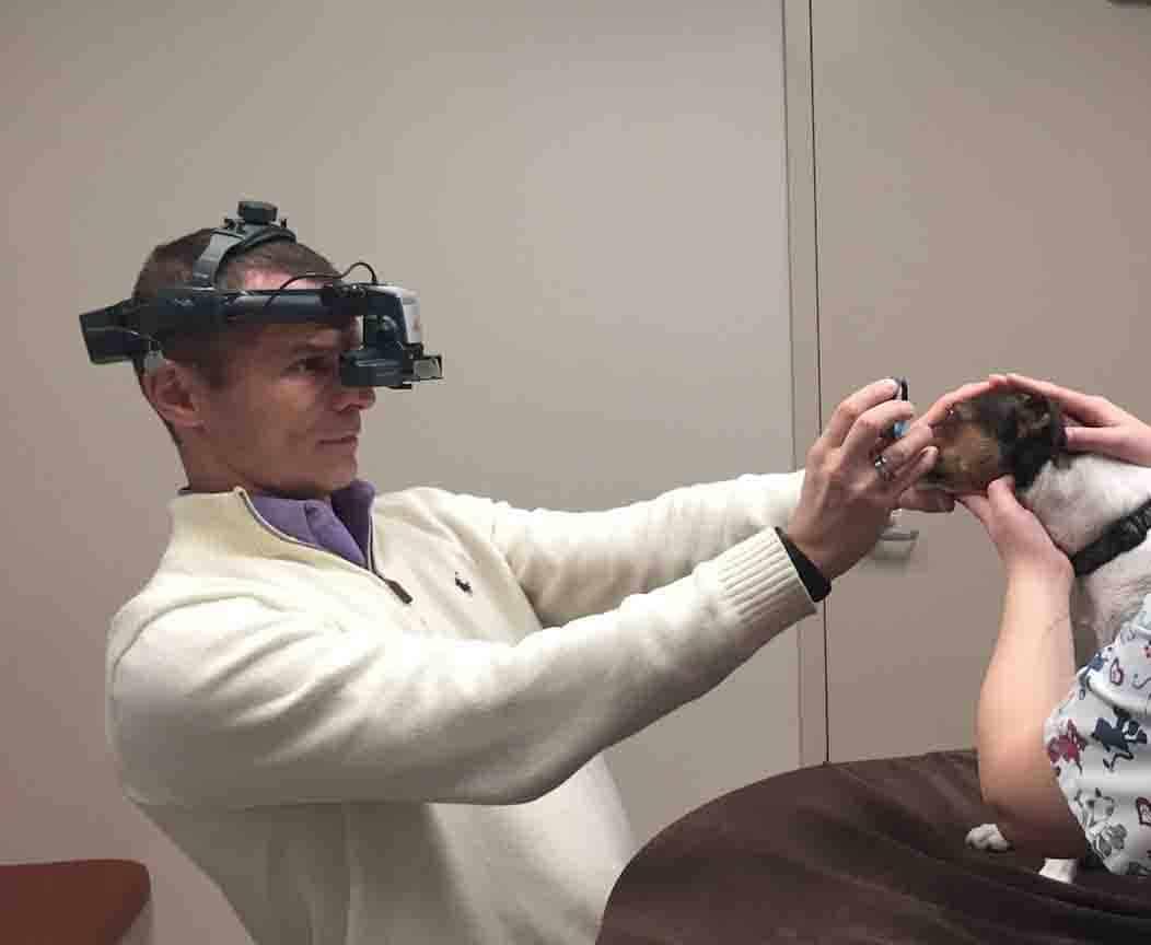 Eye examination, indirect ophthalmoscopy, fundus, retina, detachment, dog, cat, atrophy